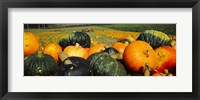 Framed Pumpkin Field, Half Moon Bay, California