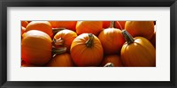 Framed Pumpkins, Half Moon Bay, California, USA