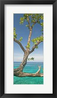 Framed Tree overhanging sea at Xtabi Hotel, Negril, Westmoreland, Jamaica