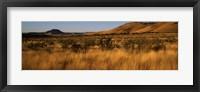 Framed Dry grass on a landscape, Texas, USA