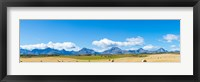 Framed Hay bales in a field with Canadian Rockies in the background, Alberta, Canada