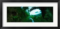 Framed Trail through a rainforest, Cayo District, Belize