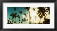 Framed Palm trees along the beach in Morro De Sao Paulo, Tinhare, Cairu, Bahia, Brazil