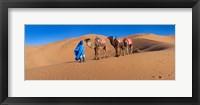 Framed Tuareg man leading camel train in desert, Erg Chebbi Dunes, Sahara Desert, Morocco