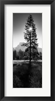 Framed Sun Behind Pine Tree, Half Dome, Yosemite Valley, California, USA