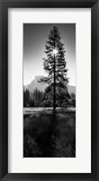 Framed Sun Behind Pine Tree, Half Dome, Yosemite Valley, California, USA