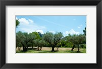 Framed Olive trees in front of the ancient Monastere Saint-Paul-De-Mausole, St.-Remy-De-Provence, Provence-Alpes-Cote d'Azur, France