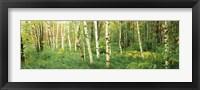 Framed Wild Gardens of Acadia, Acadia National Park, Maine