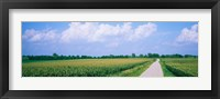 Framed Road along corn fields, Jo Daviess County, Illinois, USA