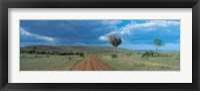 Framed Masai Mara Game Reserve Kenya
