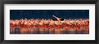 Framed Lesser flamingos in a lake, Lake Nakuru, Lake Nakuru National Park, Kenya