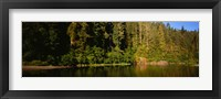 Framed Reflection of trees in a river, Smith River, Jedediah Smith Redwoods State Park, California, USA