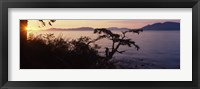 Framed Silhouette of trees at seaside, Rosario Strait, San Juan Islands, Washington State, USA