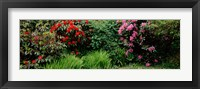 Framed Rhododendrons plants in a garden, Shore Acres State Park, Coos Bay, Oregon