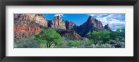 Framed Cottonwood trees and The Watchman, Zion National Park, Utah, USA