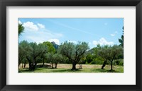 Framed Olive trees in front of the ancient Monastere Saint-Paul-De-Mausole, St.-Remy-De-Provence, Provence-Alpes-Cote d'Azur, France