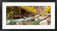 Framed Cottonwood trees and rocks along Virgin River, Zion National Park, Springdale, Utah, USA