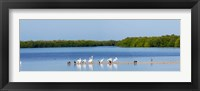 Framed White pelicans on Sanibel Island, Florida, USA