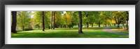 Framed Trees in autumn, Blue Lake Park, Portland, Multnomah County, Oregon, USA