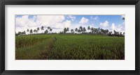 Framed Rice field, Bali, Indonesia