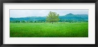 Framed Agricultural field with mountains in the background, Cades Cove, Great Smoky Mountains National Park, Tennessee, USA