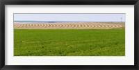 Framed Harvested alfalfa field patterns, Oklahoma, USA
