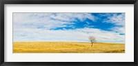 Framed Lone Hackberry tree in autumn plains, South Dakota