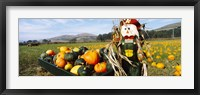 Framed Scarecrow in Pumpkin Patch, Half Moon Bay, California (horizontal)
