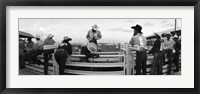 Framed Cowboys at rodeo, Pecos, Texas, USA