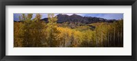 Framed Trees in autumn, Colorado