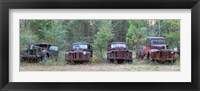 Framed Old rusty cars and trucks on Route 319, Crawfordville, Wakulla County, Florida, USA