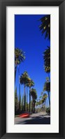 Framed Palm trees along a road, Beverly Hills, Los Angeles County, California, USA