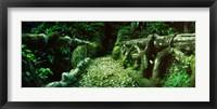 Framed Wooden bridge in the subtropical forest, Parque Lage, Jardim Botanico, Corcovado, Rio de Janeiro, Brazil