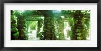 Framed Stone canopy in the botanical garden, Jardim Botanico, Zona Sul, Rio de Janeiro, Brazil
