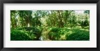 Framed Trees in a botanical garden, Jardim Botanico, Zona Sul, Rio de Janeiro, Brazil