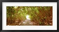 Framed Trees on the entrance of a beach, Delray Beach, Palm Beach County, Florida, USA