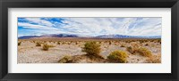 Framed Bushes in a desert, Death Valley, Death Valley National Park, California, USA