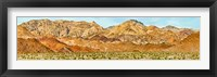 Framed Bushes in a desert with mountain range in the background, Death Valley, Death Valley National Park, California