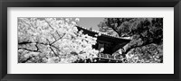Framed Golden Gate Park, Japanese Tea Garden (black & white)