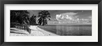 Framed Palm trees on the beach, Matira Beach, Bora Bora, French Polynesia