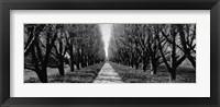 Framed Trees along a walkway in black and white, Niagara Falls, Ontario, Canada