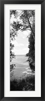 Framed Trees at the lakeside in black and white, Lake Michigan, Wisconsin