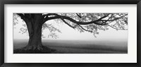 Framed Tree in a farm, Knox Farm State Park, East Aurora, New York State, USA