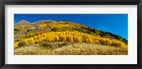 Framed Aspen trees on mountain, Alpine Loop Scenic Backway, San Juan National Forest, Colorado, USA