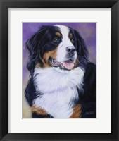Framed Bernese Mountain Dog
