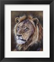 Framed Black-Maned Lion