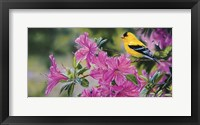 Framed Goldfinch In Azaleas