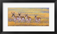 Framed Pronghorn