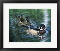 Framed Wood Ducks