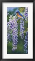 Framed Bluebird In Wisteria
